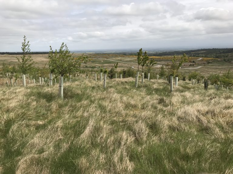 Tree planting on the Catterick Training Area [Crown Copyright/MOD2018]